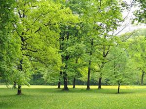 Location et vente de nécessaire d'entretien d'espaces verts à Moissac